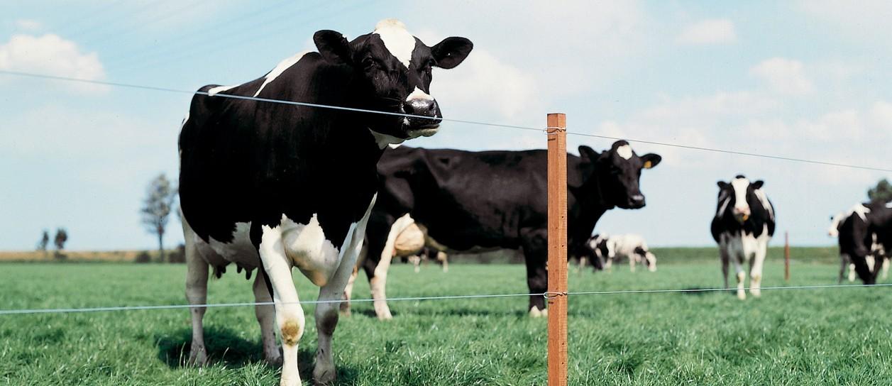 urzadzenia-do-produkcji-mleczarskiej